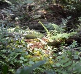 脊振の森林